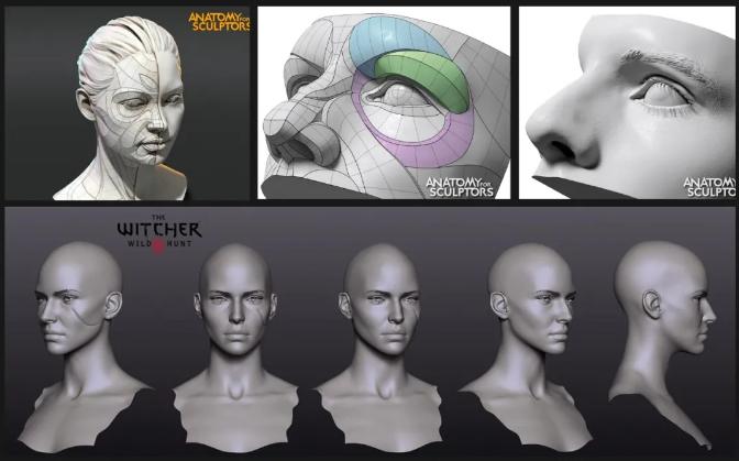 参考教程《Anatomy For Sculptors》 - 瑞云渲染